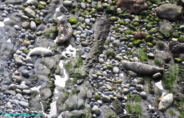 017-Spot-the-seals