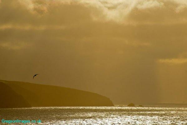 066-Lone-Seagull