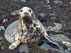 008-Seal-looking-furtive
