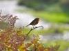 070-Robin-on-a-clifftop-walk