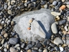 093-Stone-Footprint