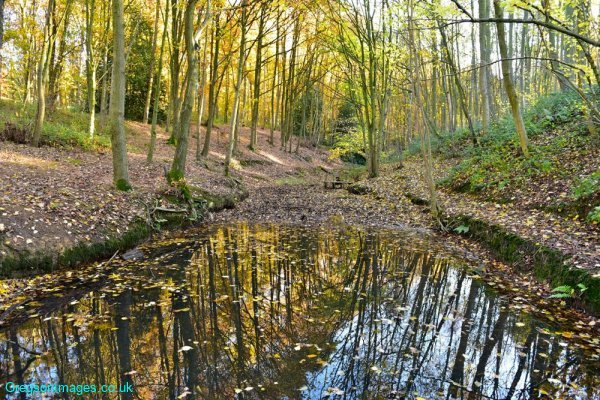 214-Autumn-colours-in-Silverwood