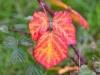 057-A-Bramble-leaf-turning