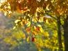 189-Autumn-Days-at-Bretton-Park