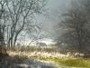 229-Horses-in-winterlight