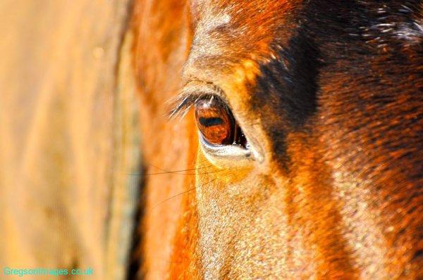 10-Horseye