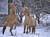 08-Horses-in-the-snow