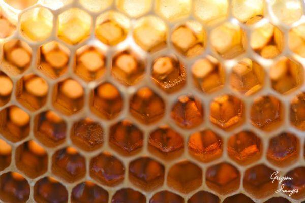12-Honeycomb