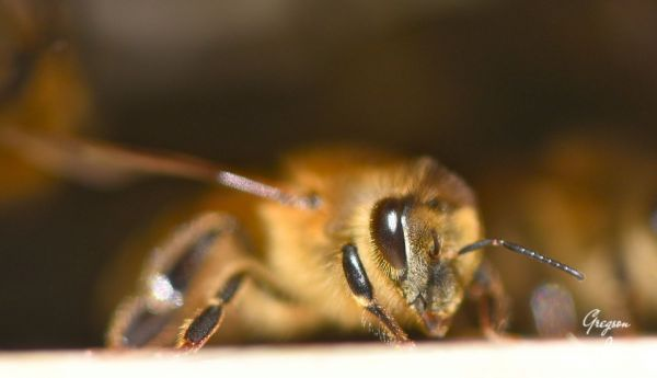 15-Bees-in-the-hive