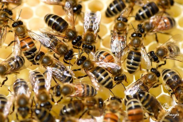 16-Bees-in-the-hive