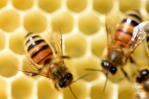 18-Bees-in-the-hive