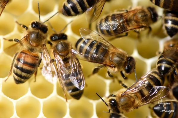 19-Bees-in-the-hive