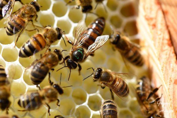 36-Queen-Bee