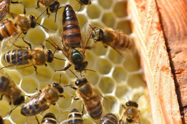 37-Queen-Bee