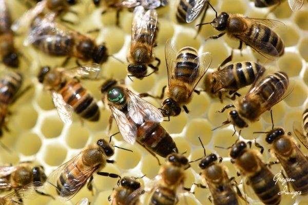 40-Queen-Bee