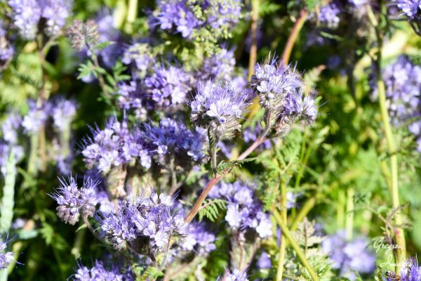 60-Wildflowers