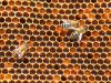 27-Bees-in-the-hive