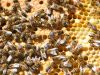 32-Bees-in-the-hive