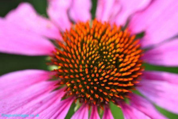 146-Flower-at-Julie-and-Johns