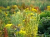 123-Wildflower-tapestry