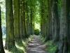 182-Lady-Lucys-Walk-at-Stainborough