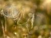187-Spiders-web-art