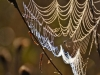 191-Spiders-Web-in-the-early-morning-light