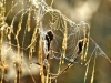 192-Spiders-Web-in-the-early-morning-light