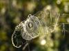 197-Horses-head-or-spiders-webs