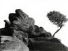 07bw-brimham-rock-tree