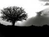 24bw-judas-tree-israel