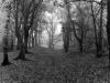 77bw-in-the-woods-at-weybridge