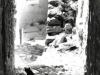 78bw-zefat-cat-israel