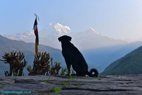 375-The-dog-and-the-mountain