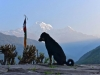 374-The-dog-and-the-mountain