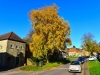 082-Osmotherley-on-a-beautiful-Autumn-day