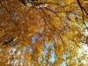 103-Autumn-in-Osmotherly