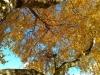 104-Autumn-in-Osmotherly