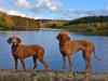 205-Dogs-by-Codbeck-Reservoir