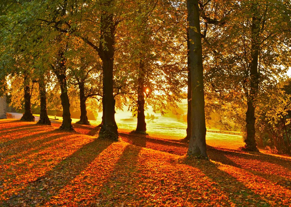 008.-Autumn-Sunrise-Cannon-Hall