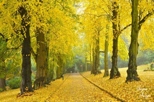 032.-Autumn-Avenue-Cannon-Hall