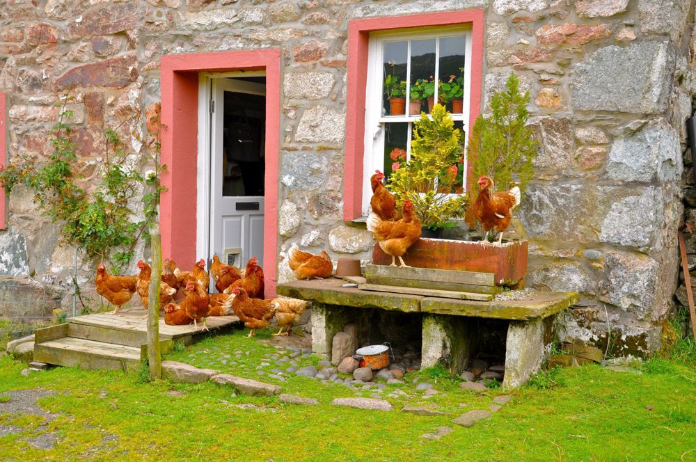 072.-The-Chicken-House-near-Boot-Cumbria