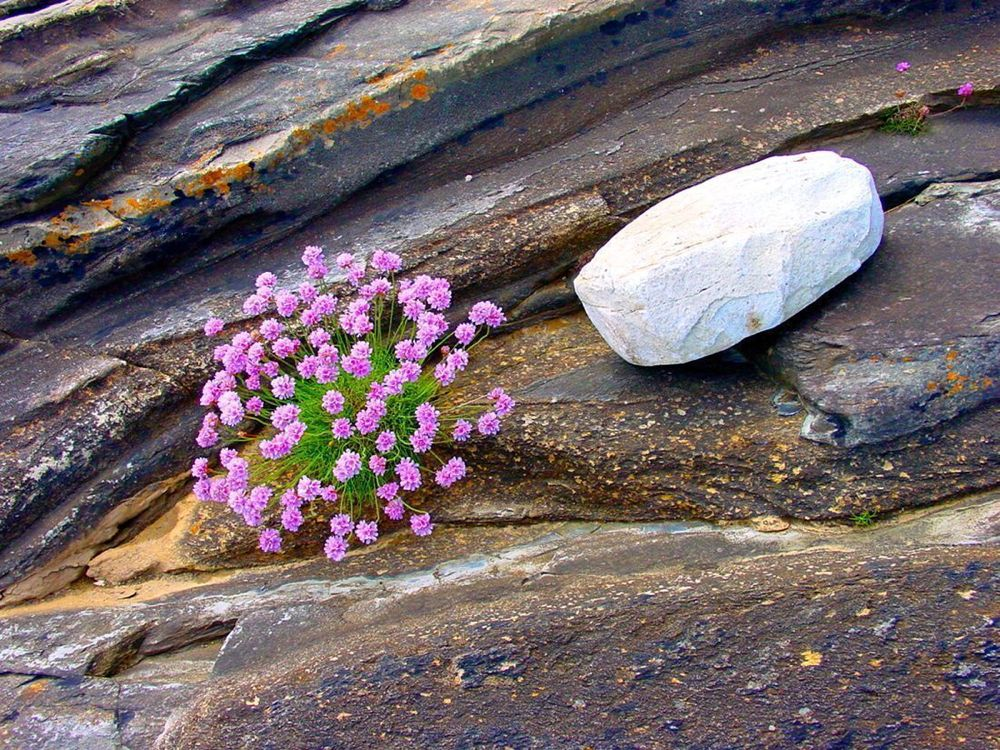074.-The-Flower-and-the-Stone-Ireland