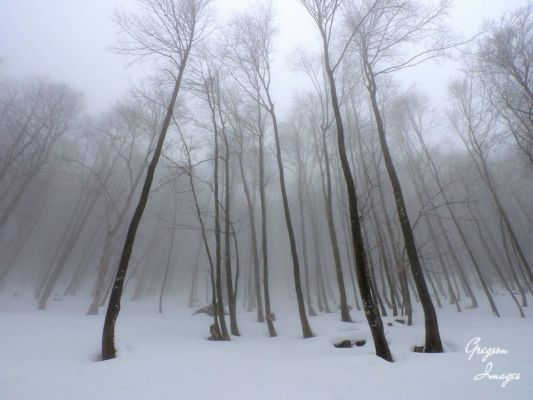 077-Winterwood
