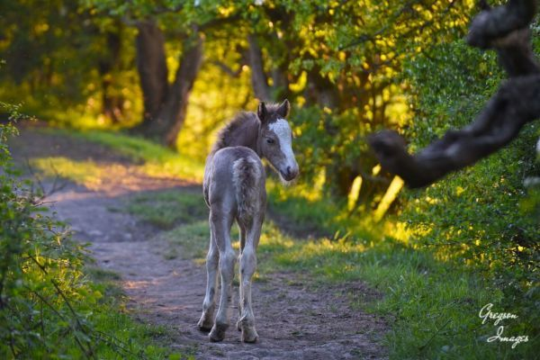 080-Young-Foal-on-the-Path