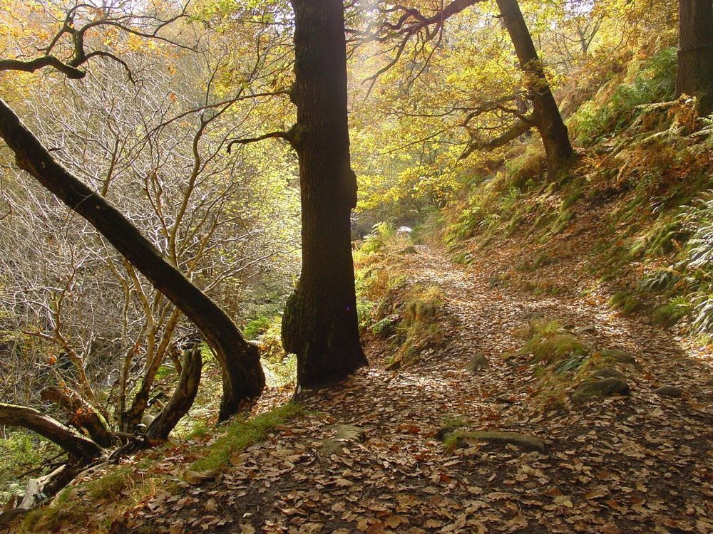 081.-The-Path-in-Padley-Woods
