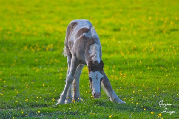 091-Young-Foal