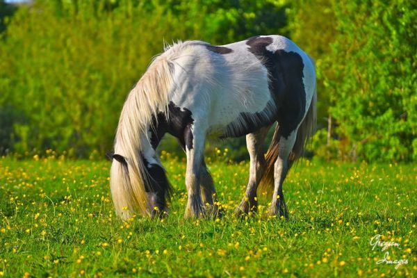 092-Horse-in-Clover