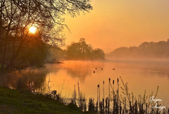103-Misty-sunrise-over-Bretton-Lakes