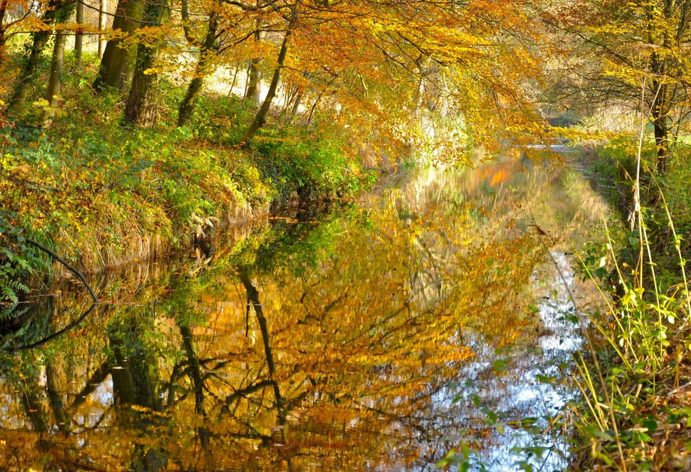 112-Reflections-of-Autumn-at-Bretton